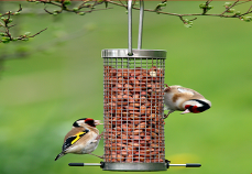 Bird feed image